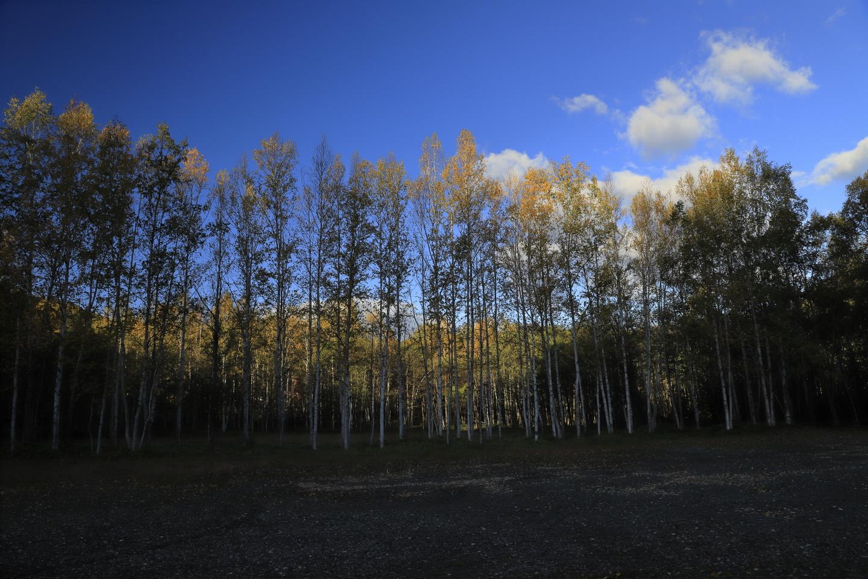 Morgensonne auf Baumwipfeln