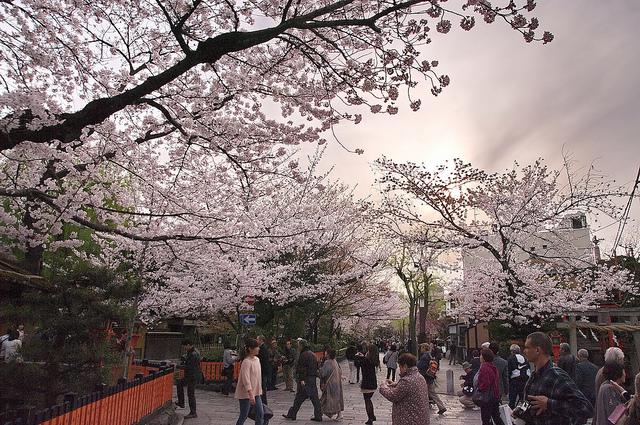 Gion Shirakawa zur Kirschblütenzeit