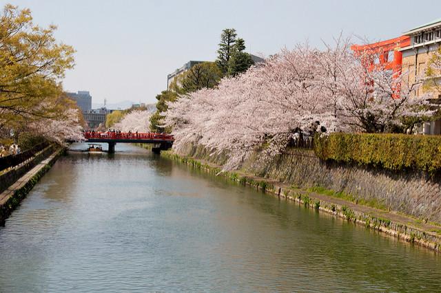 Der von blühenden Kirschbäumen gesäumte Okazaki Kanal