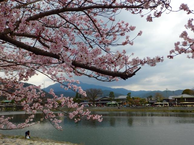 Arashiyama während der Kirschblütensaison