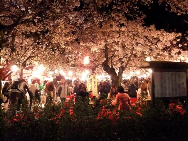 Hanami Partys im Maruyama Park