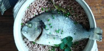 Tai-Meshi: Dorade auf Reis