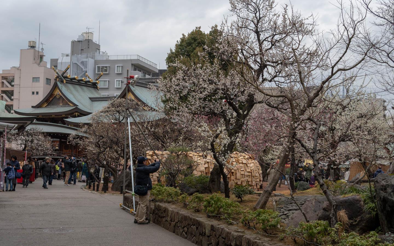 pflaumenblüten yushima tenjin