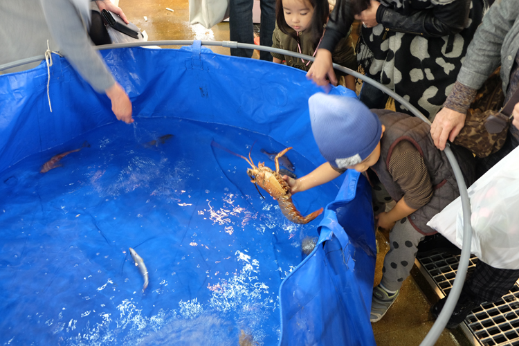 Planschbecken mit lebenden Fischen zum Anfassen am Nagahama Fischmarkt