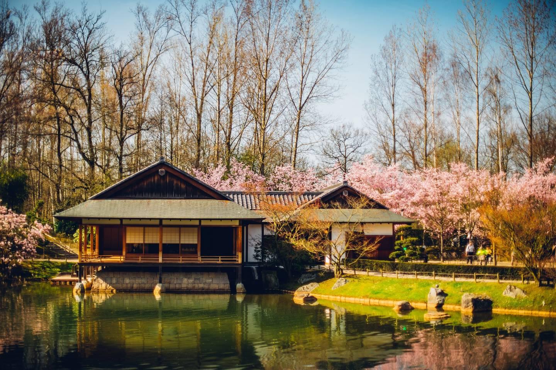 Der japanische Garten in Hasselt mit Teehaus und Kirschblüten.
