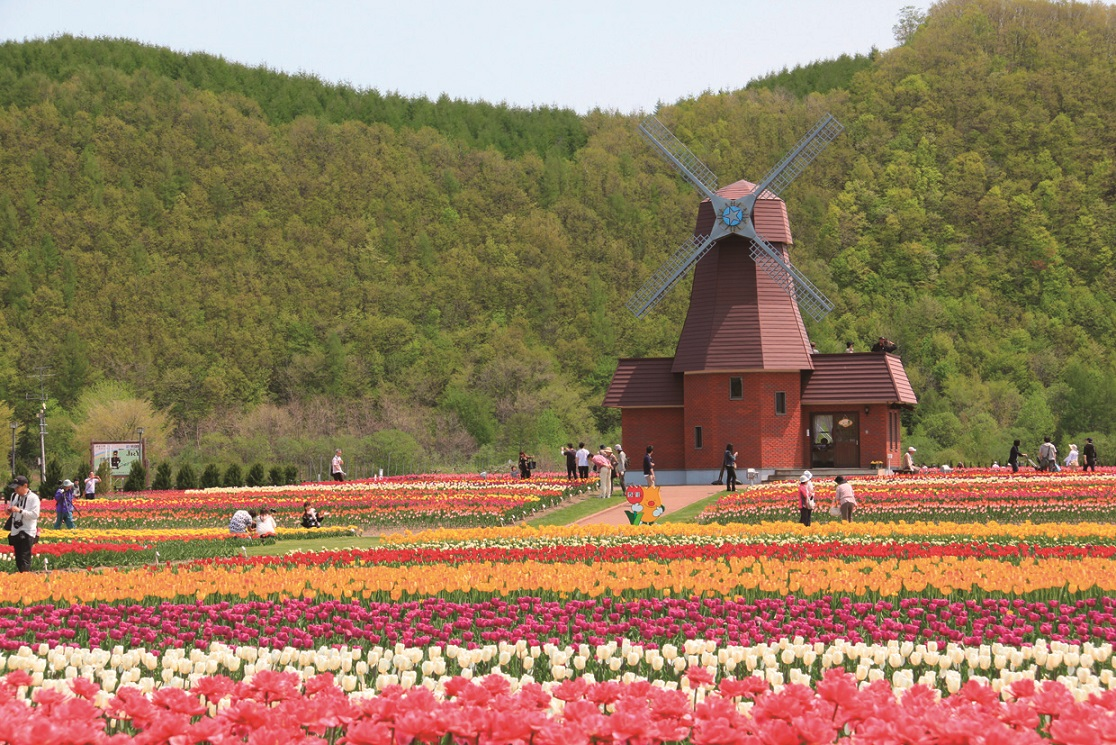 Blumenfelder in Japan