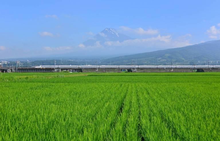 Reisfeld in Japan mit Bergen im Hintergrund