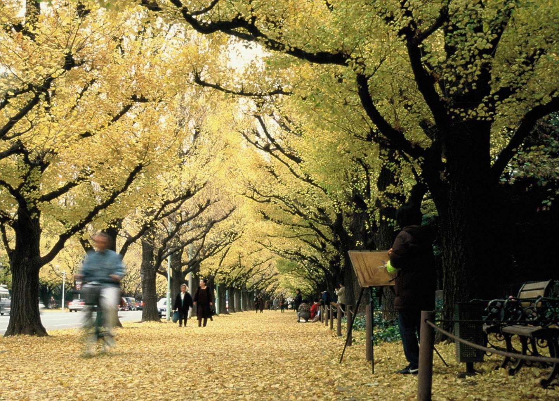 Herbst im Meiji Jingū Gaien