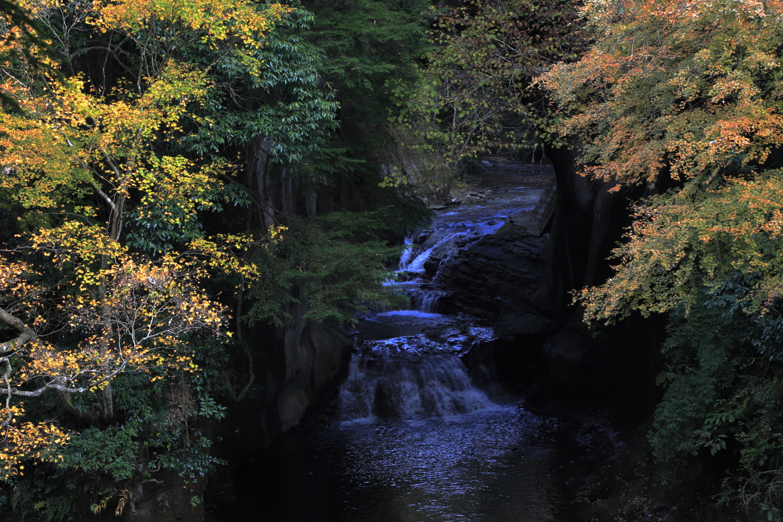Herbslaub am Nōmizo-Wasserfall