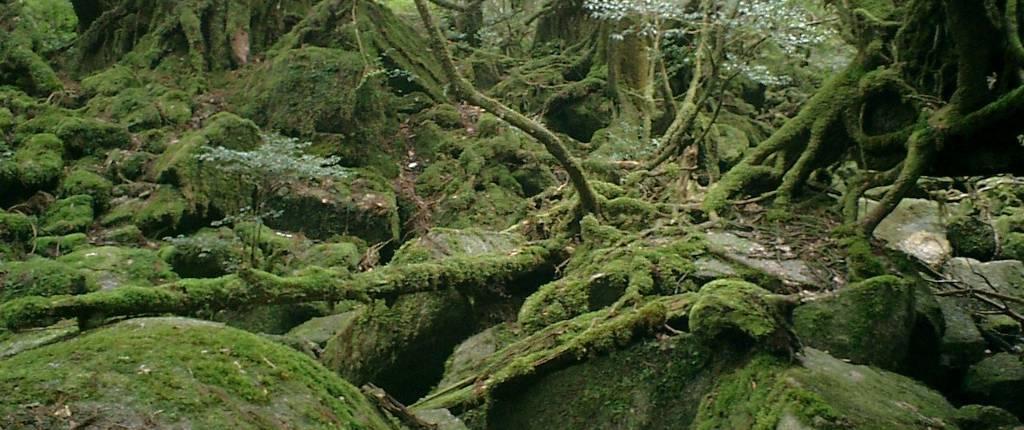 Yakushima Waldlandschaft