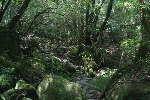 Shiratani Unsuikyō auf Yakushima