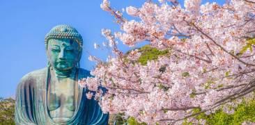Großer Buddha in Kamakura mit Kirschblüten