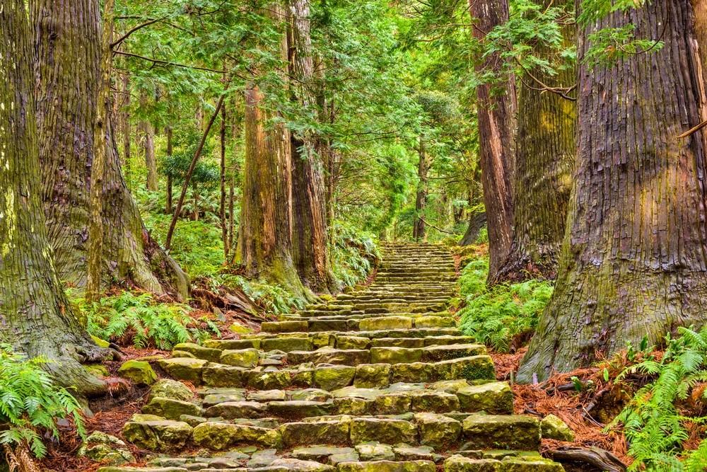 Waldweg auf dem Kumano Kodō