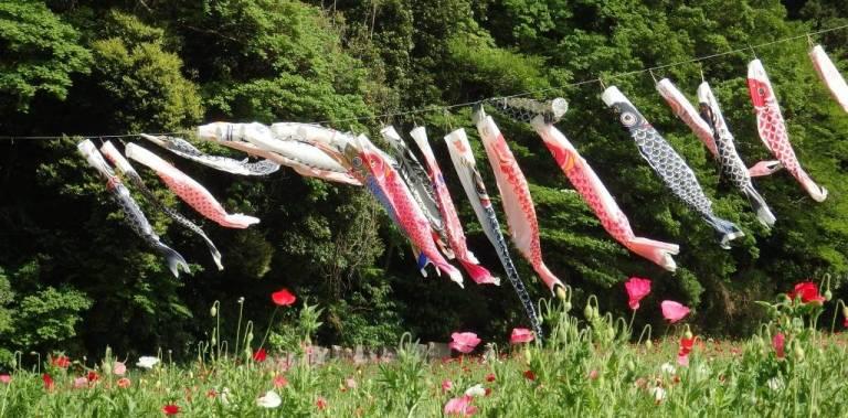 Koi-Flaggen im Blumenpark in Yokosuka
