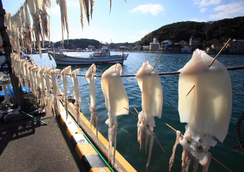 Tintenfische, die zum Trocknen aufgehangen wurden, am Hafen in Karatsu