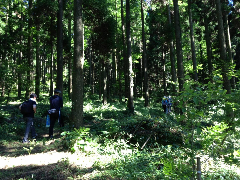 Wald in Ureshino