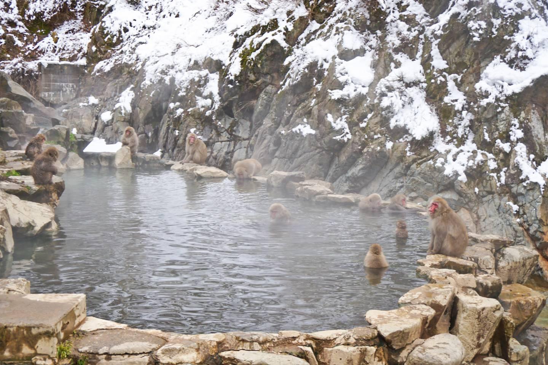badende Affen in Nagano