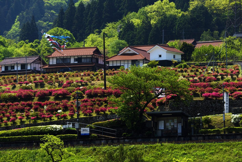 Koi nobori in Tsuwano in der Präfektur Shimane