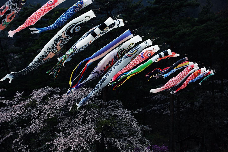 Viele koi nobori in der Stadt Agematsu (Präfektur Nagano).