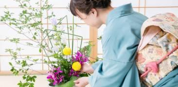Frau im Kimono arrangiert Ikebana