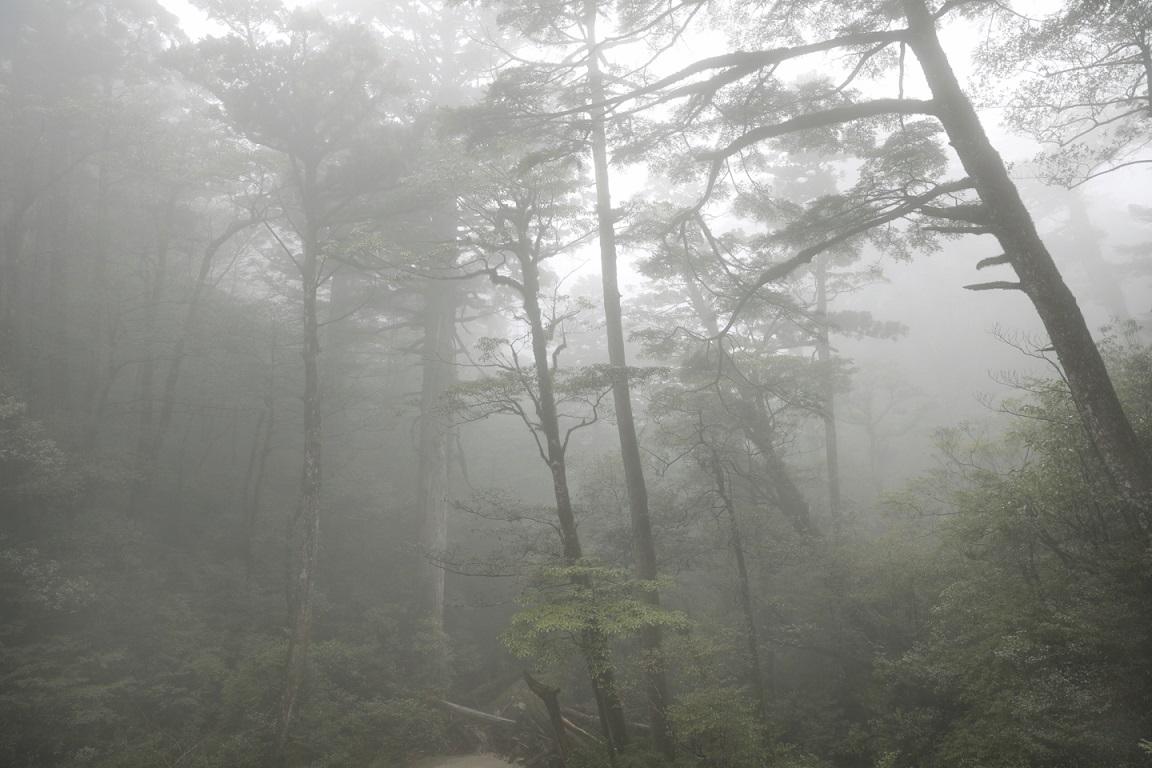 Nebelschwaden auf Yakushima