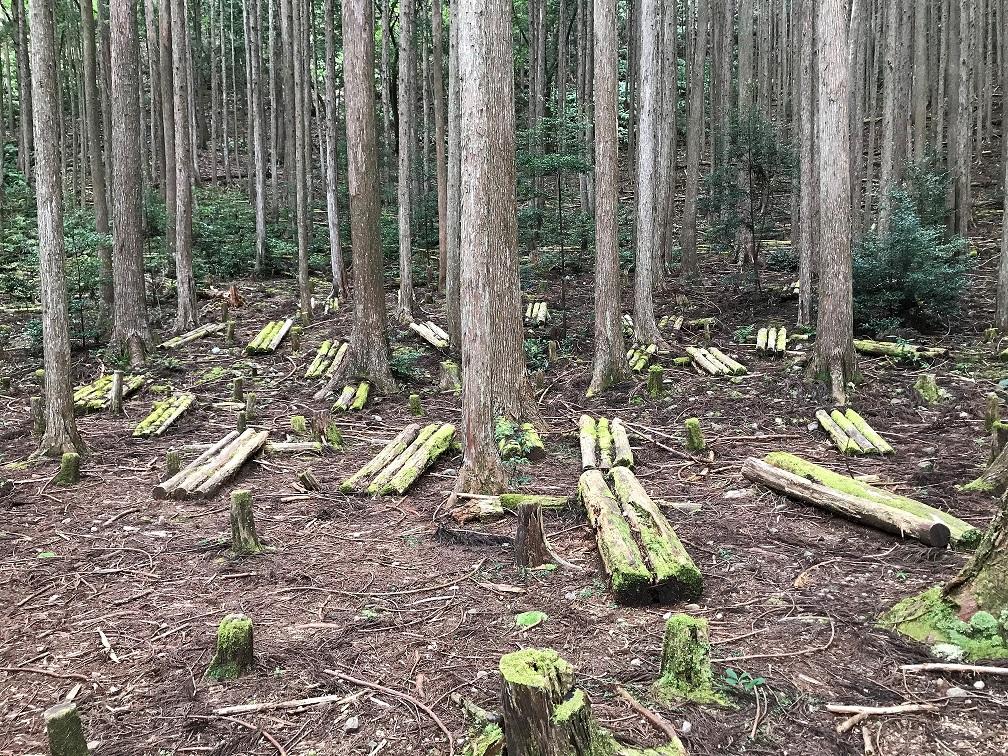 Wald in Kumano Kodo