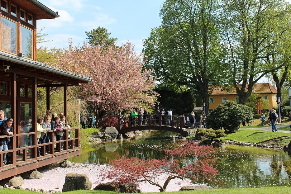 Kirschblütenfest im Japanischen Garten Bad Lagensalza.