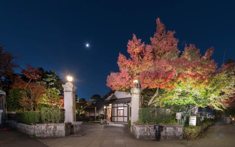 Abendliches Herbstlaub in Koganei