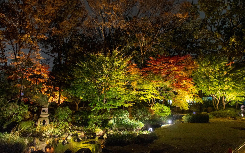 Herbstlaub in Koganei