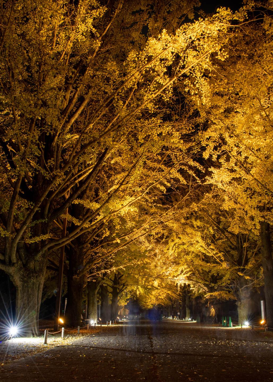 Herbstlaub in Tachikawa