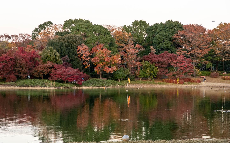 Herbstlaub am Teich in Tachikawa