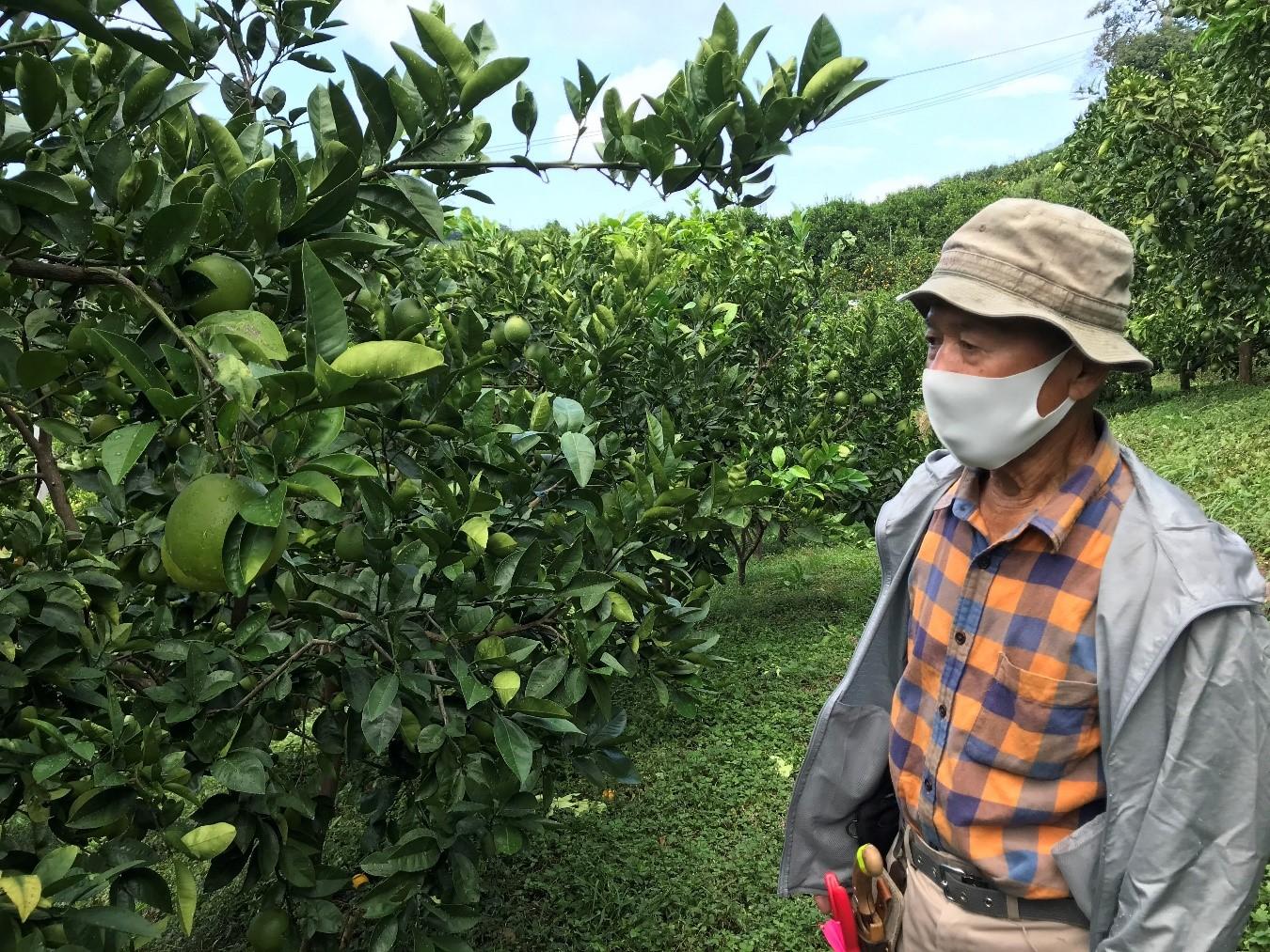 Zitrusfrucht Bauer