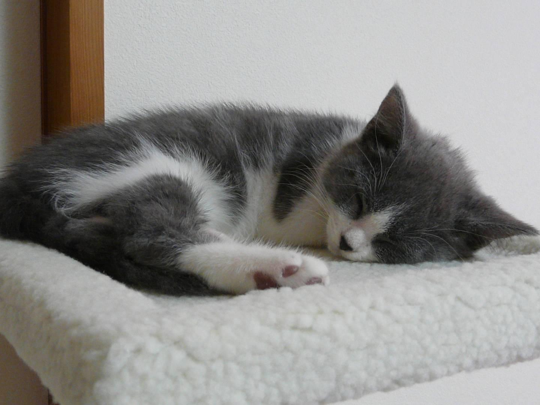 Schlafende Babykatze