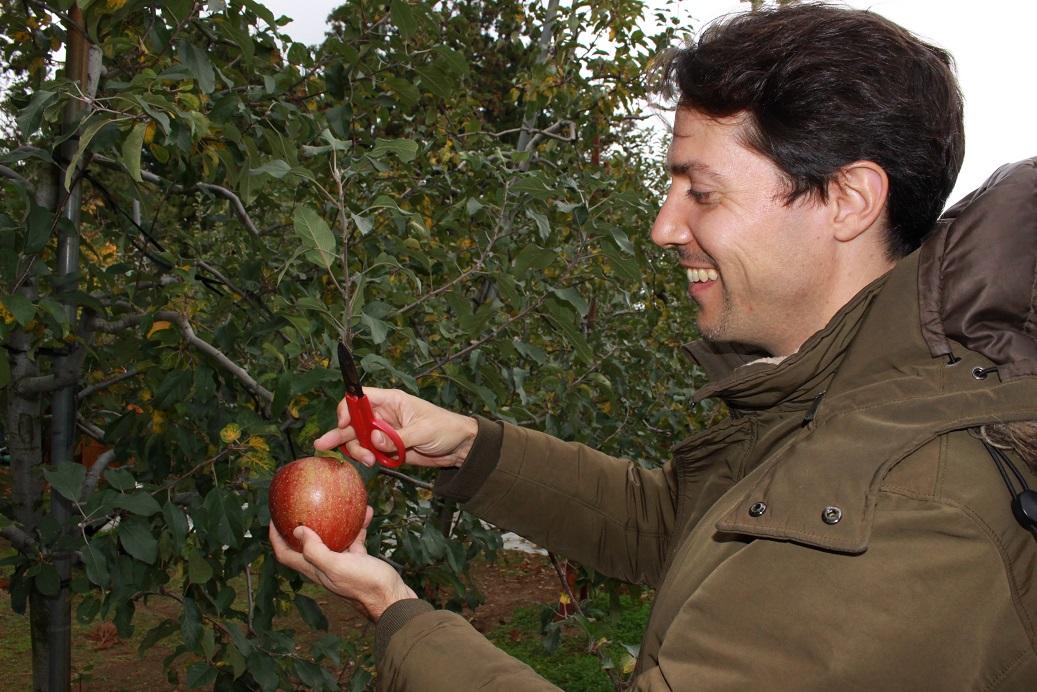 Äpfel in Akita