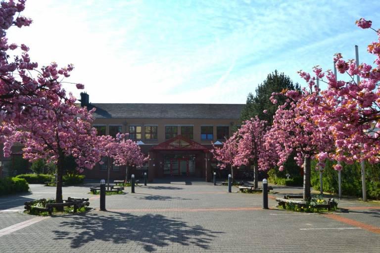 Kirschblüten vor der Japanischen Internationalen Schule Frankfurt am Main