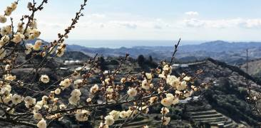 Ume in Ishigami