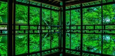 Seirin-ji Tempel, Blick ins Grüne, leuchtende Farbe