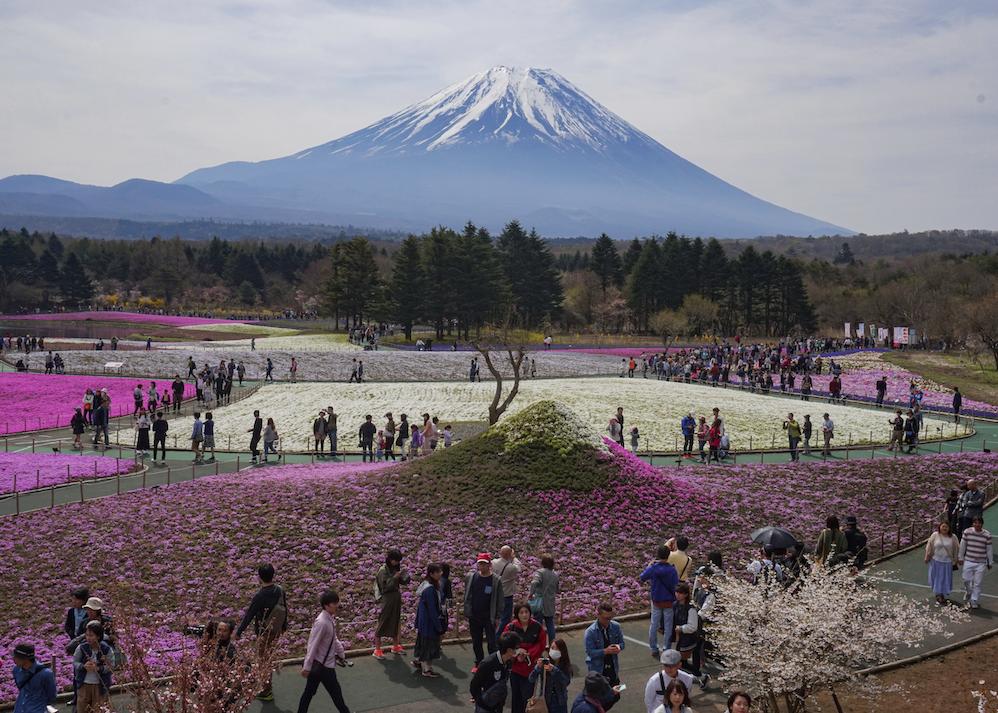Berg Fuji, blühende Felder, Frühling