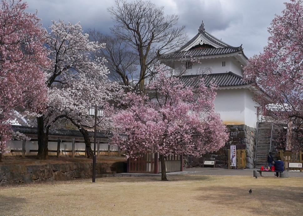 Kirschbäume im Maizurujō Kōen, bewölkter Himmel, Maizuru Schloss