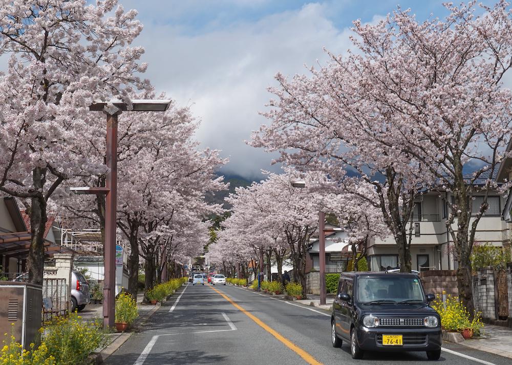 Kirschblüten-Allee, bewölkter Himmel, Auto