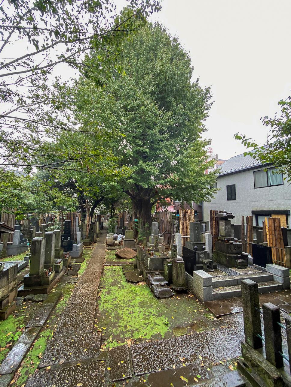 Friedhof vor dem Tempel Kōkoku-ji, hohe buddhistische Grabsteine, grüne Bäume, nasser Asphalt