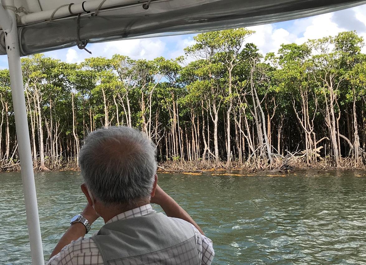 Mangroven aus Iriomote