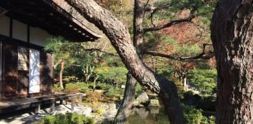 Herbstlaub in einem japanischen Tempel