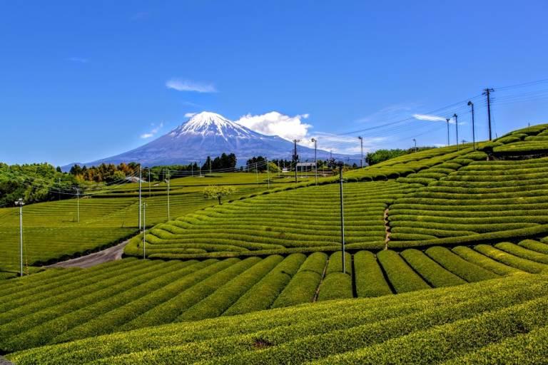 Fuji und Teefelder