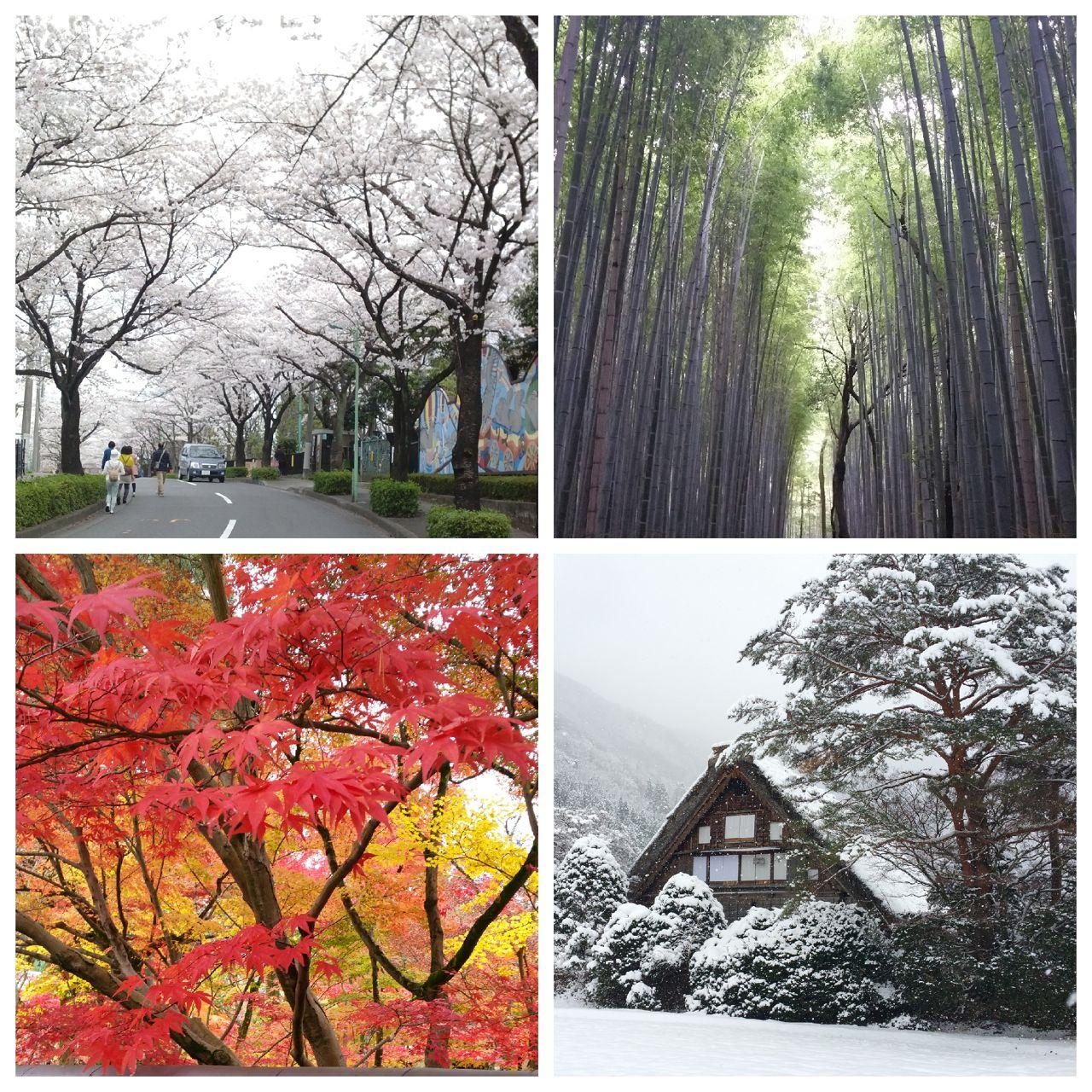 Japan Jahreszeiten
