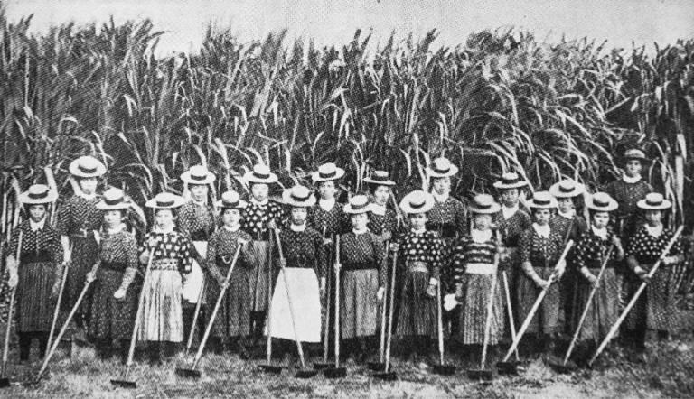 Japanische Arbeitskräfte vor einem Zuckerrohrfeld